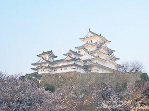 姫路城さくら